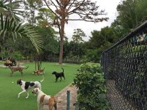 Artificial Grass Installation in North Port, Florida