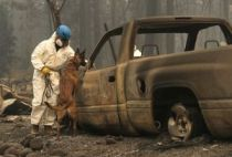 California Wildfires Death Toll Rises To 59 With Dozens Still Unaccounted For