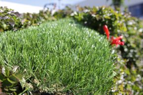 Silky-Smooth Artificial Grass