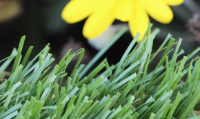 Emerald Synthetic Grass