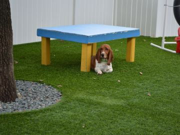 Artificial Turf Grass | Doggy Lawn Antelope California