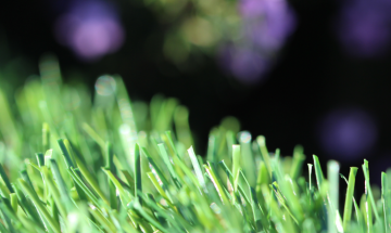 Beautiful Synthetic Grass