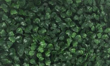 Boxwood ivy private screens, fence, balcony, rooftop deck protection decorative fencing panels privacy screen garden gardening