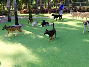 Dog Grass Huntington Park California Los Angeles County