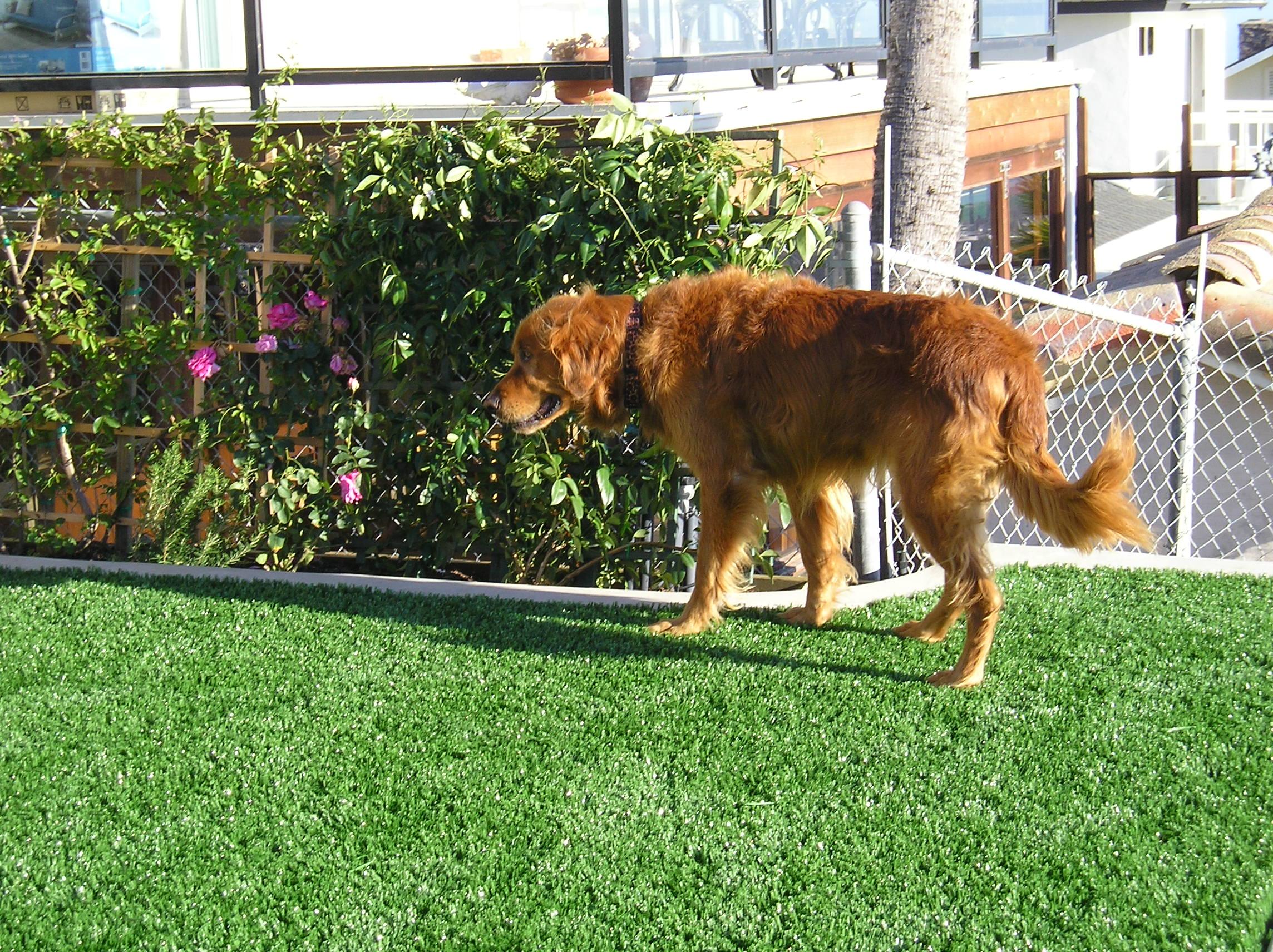 S Blade 50 artificial grass,fake grass,synthetic grass,grass carpet,artificial grass rug,artificial grass,fake grass,synthetic grass,grass carpet,artificial grass rug