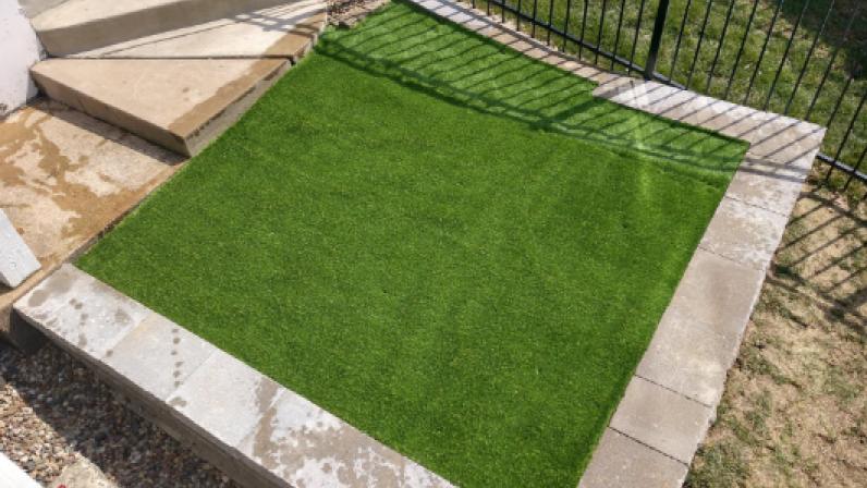 Star Grass-35 dog poop grass,dog area in backyard,dog area in backyard,how to clean fake grass,how to clean synthetic grass,clean artificial grass,grass good for dogs,how good is artificial grass