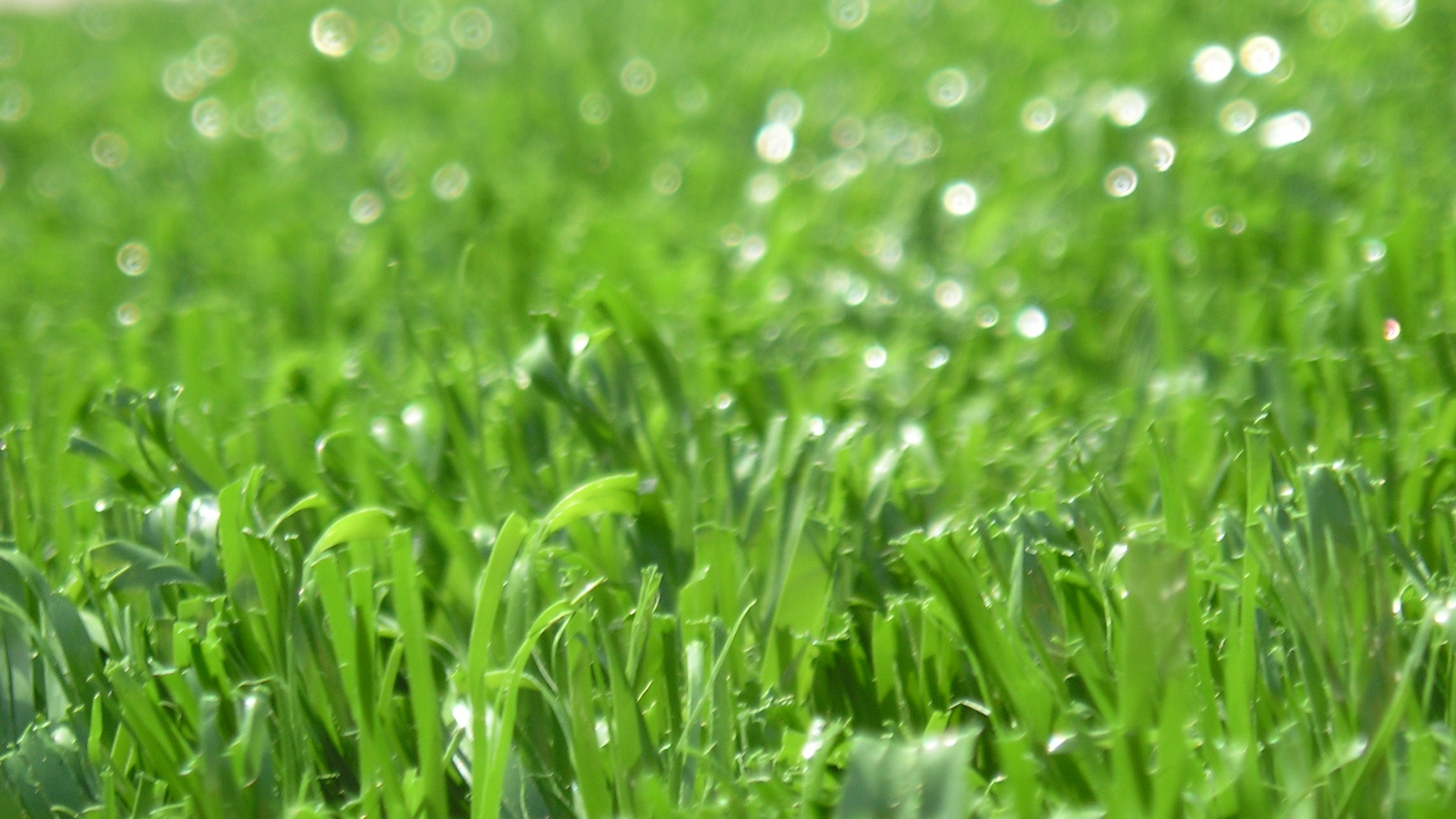 Sierra Pro-70 artificial grass,fake grass,synthetic grass,grass carpet,artificial grass rug