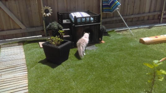 All Natural-75 grass good for cats,how good is artificial grass,cost of artificial grass,how much does it cost to install fake grass,cost of installing artificial grass, home depot artificial grass