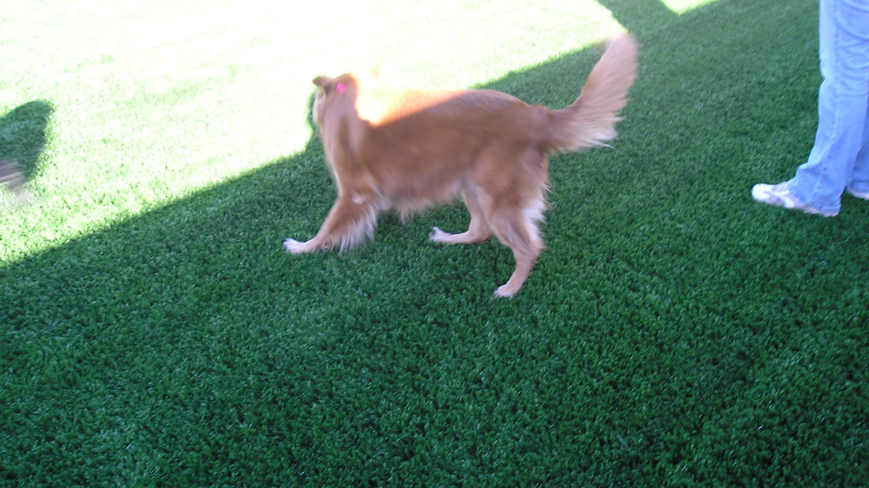 Pet Turf artificial turf for dogs,pet turf,dog turf,artificial turf for sale,artificial turf grass
