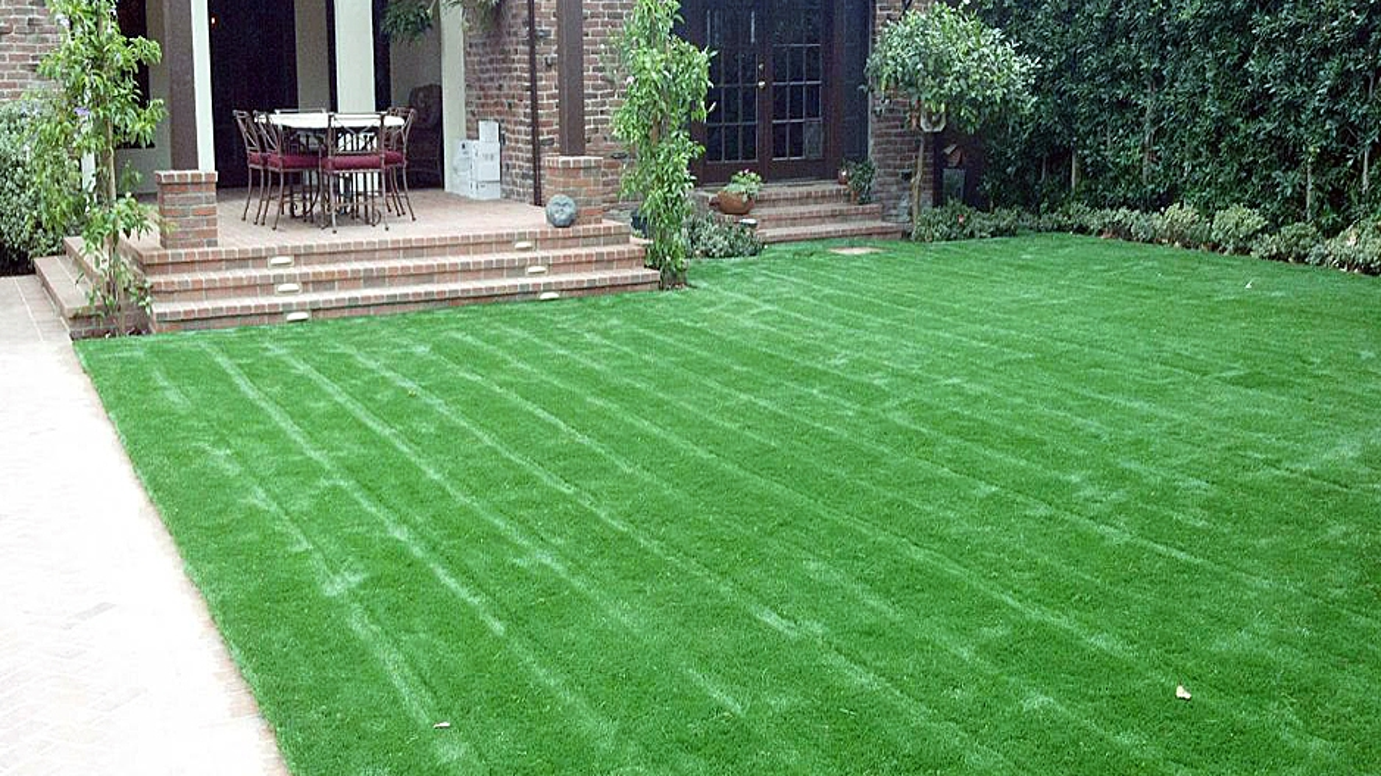 Backyard landscape yard garden with lawn stripes