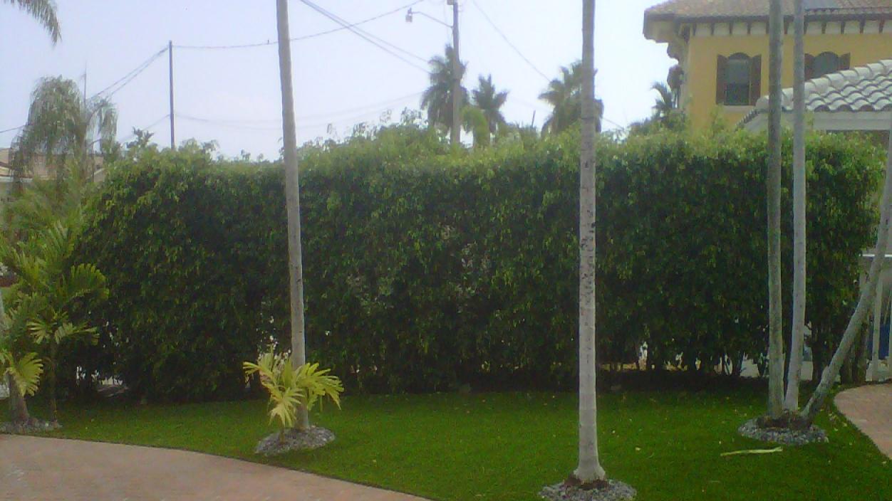 Artificial Grass Sidewalk public palm trees