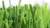 Spring-80 Artificial Grass Wholesale