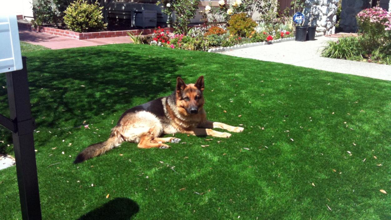 Artificial Grass Installation In La Jolla, California