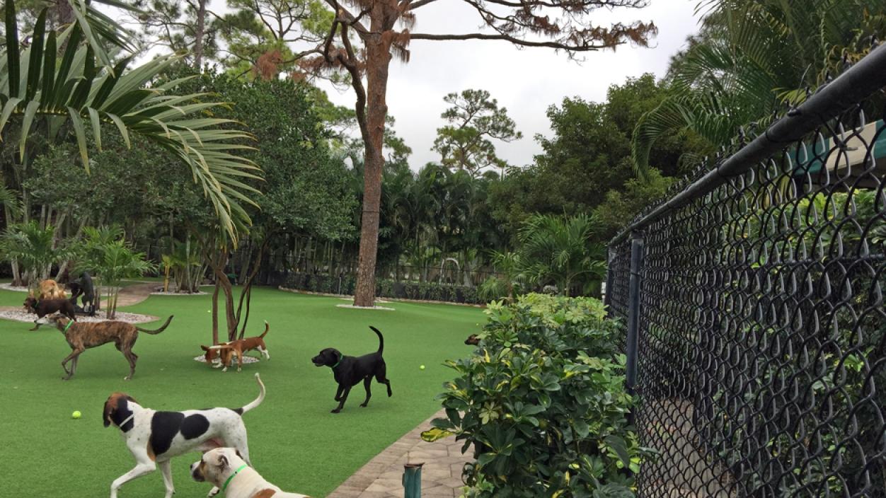 Artificial Grass Installation in North Port, Florida