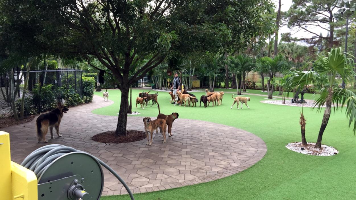 Artificial Grass Installation in Wellington, Florida