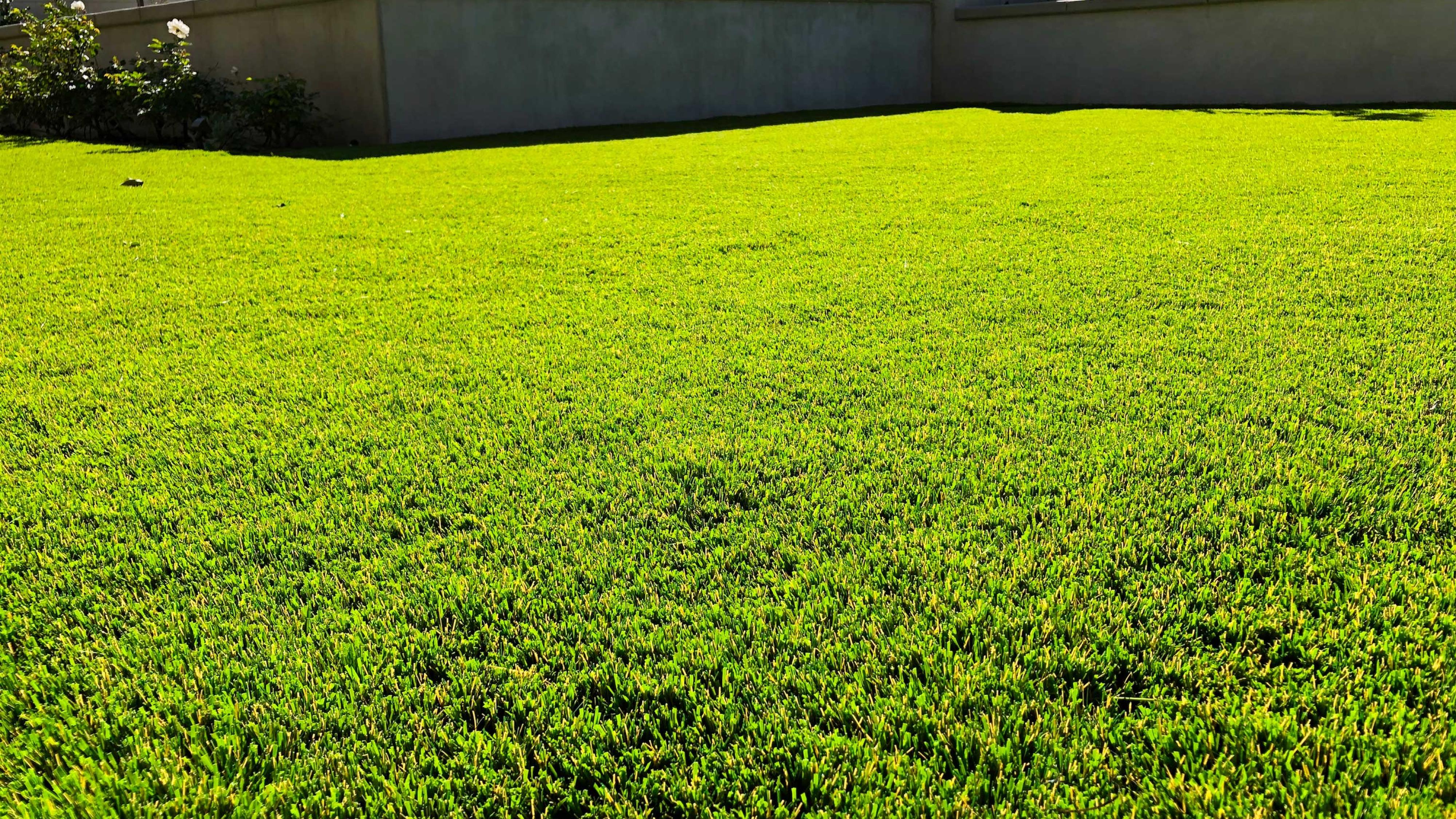 Backyard Landscape Complete Renovation