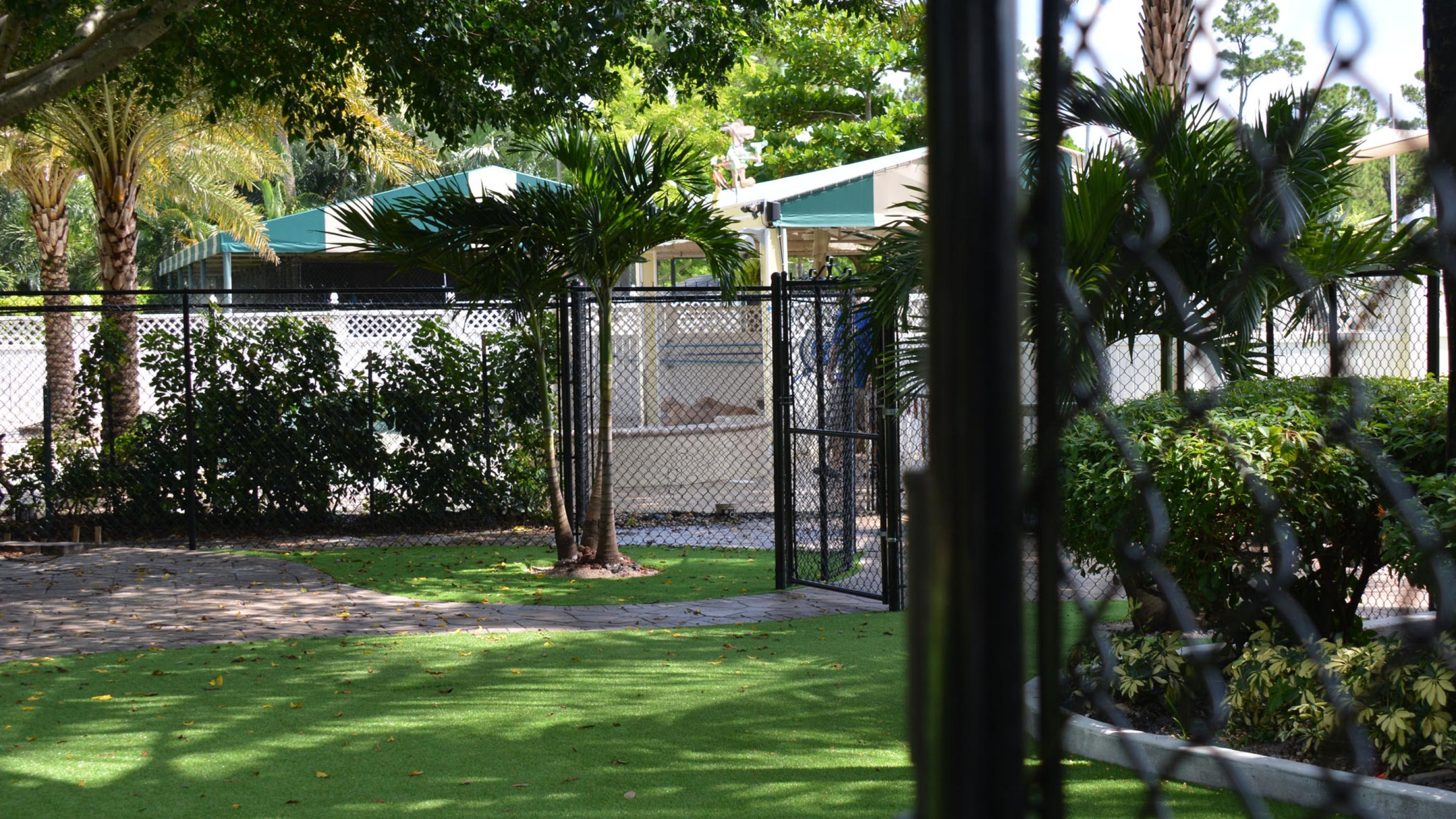 Backyard Ideas with Fake Grass Florin, California