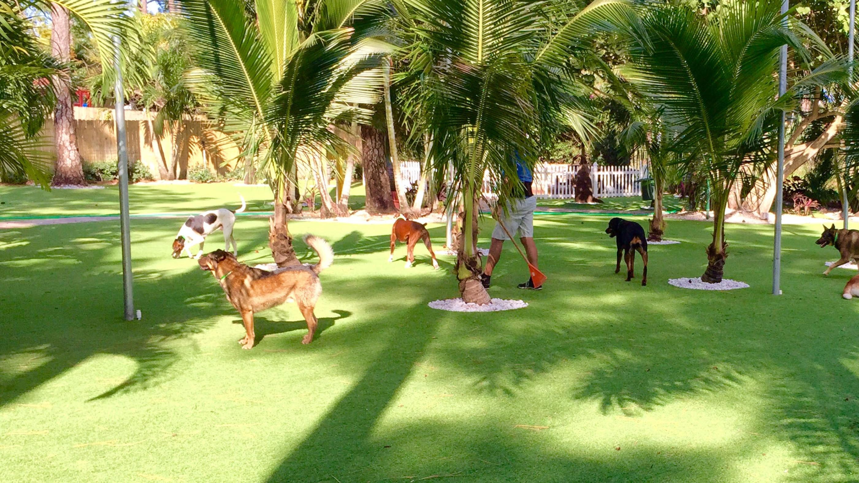 Dog Park, Artificial Grass for Dogs Laguna, California