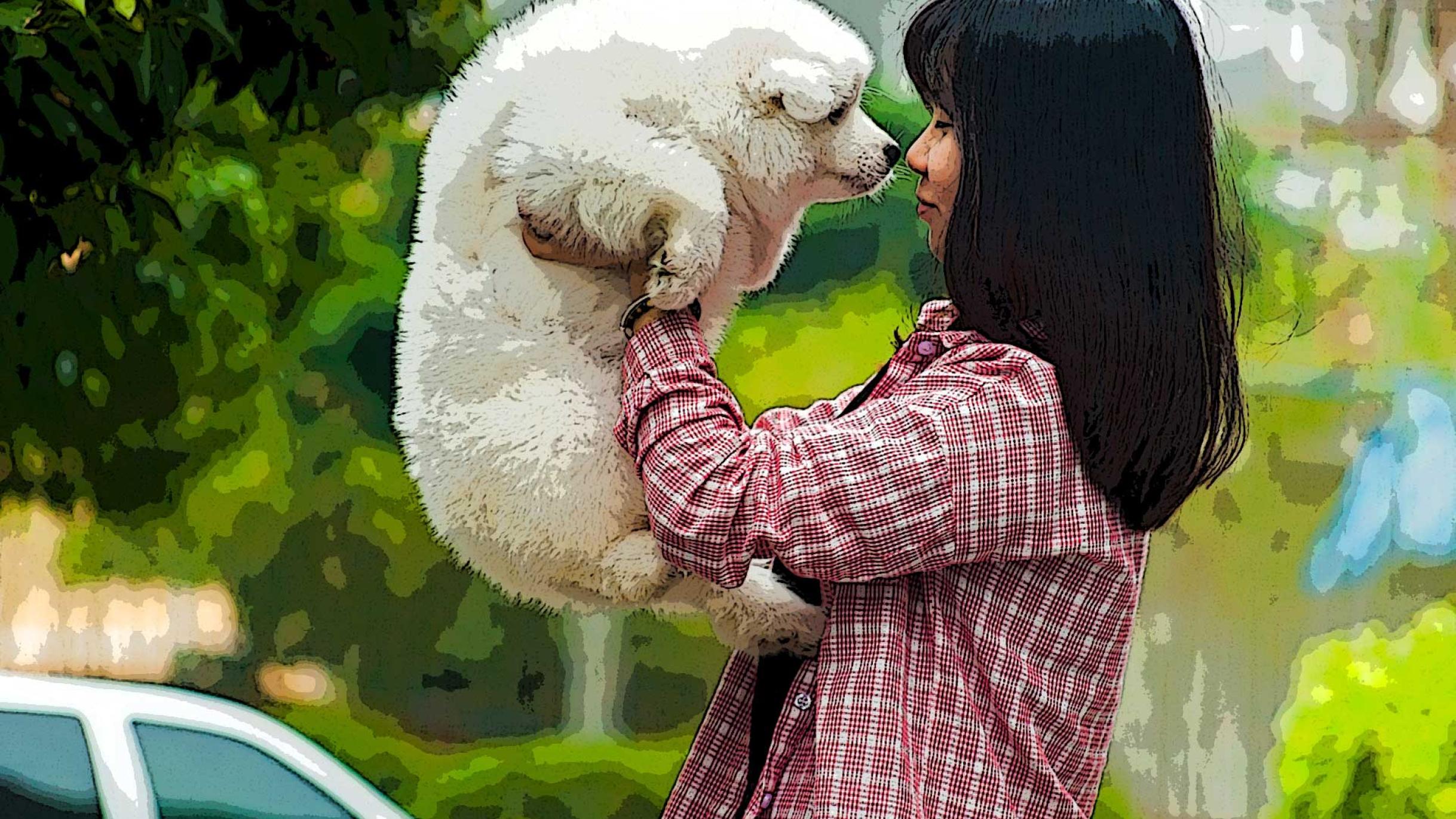 Girl love dog, white dog, puppy