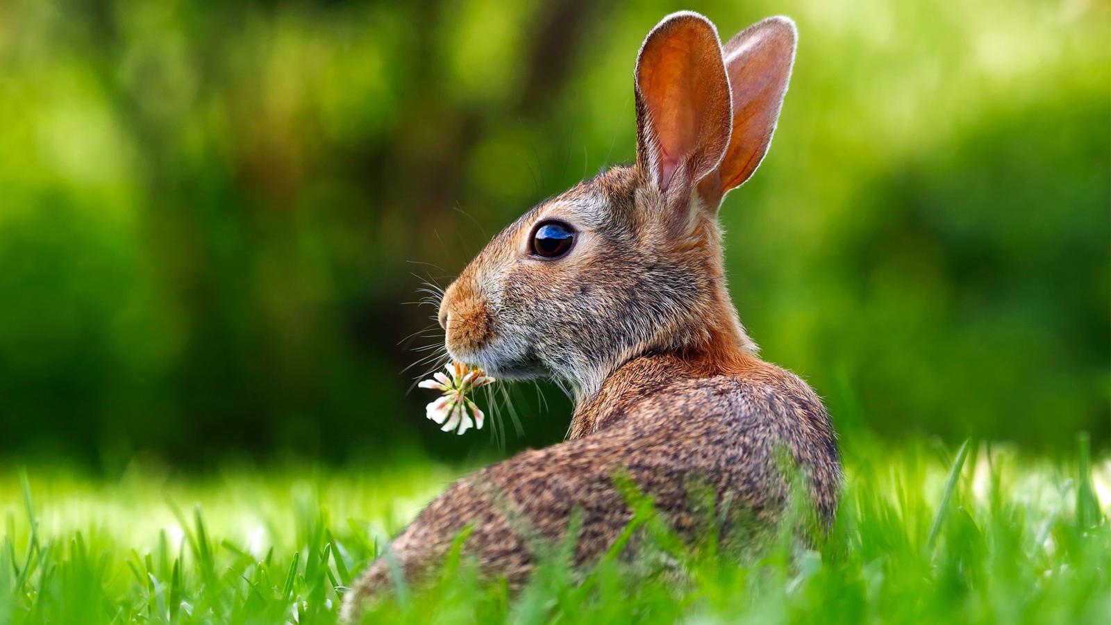 Environmentally friendly rabbit on grass