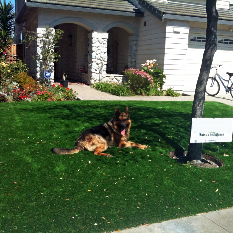 Dog laying synthetic lawn artificial grass front yard