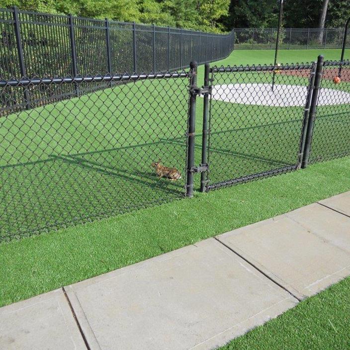 Artificial Grass Installation in Raleigh, North Carolina