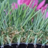 High Sierra artificial grass, double thatching, two-tone colors