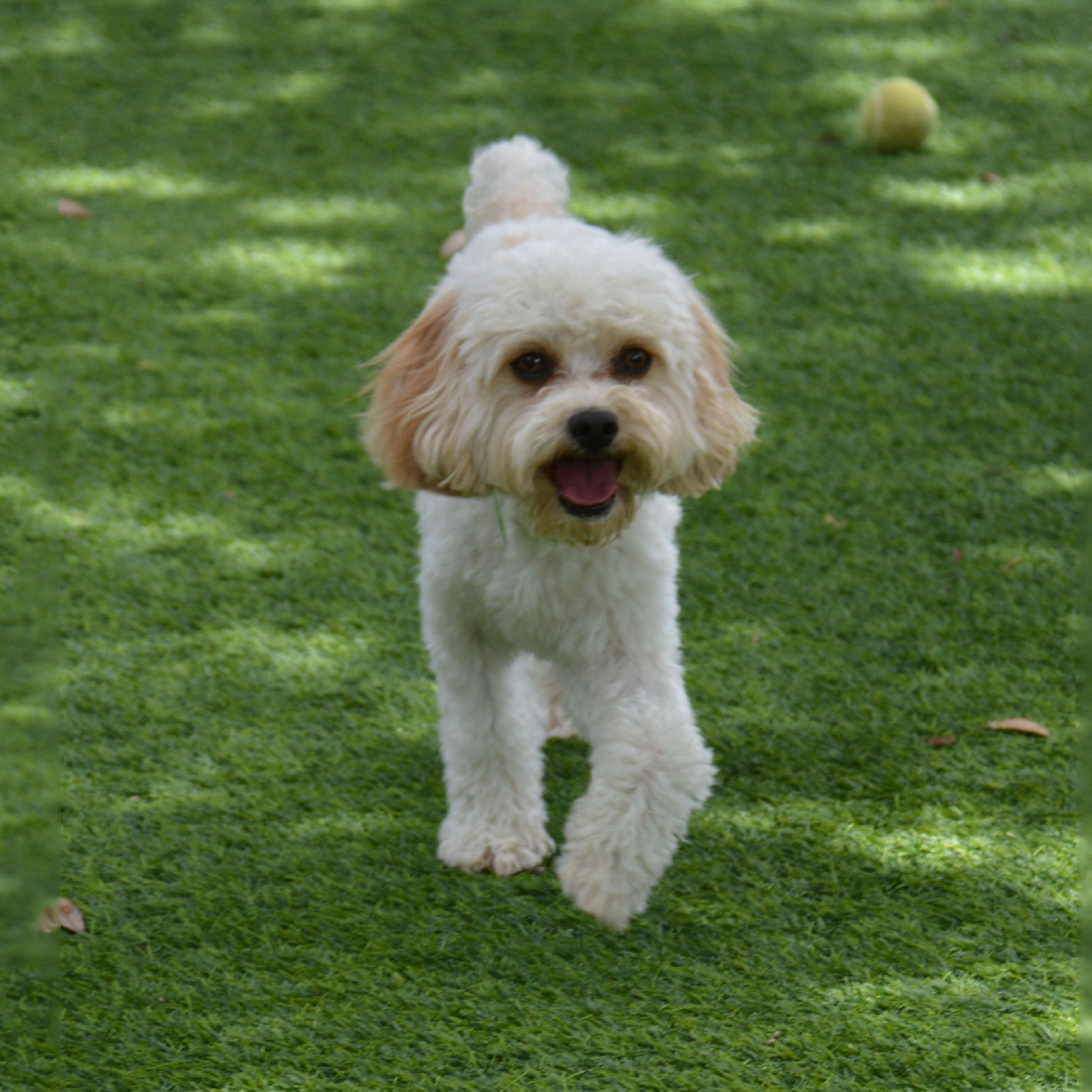 Artificial Grass for Dogs Hemet, California