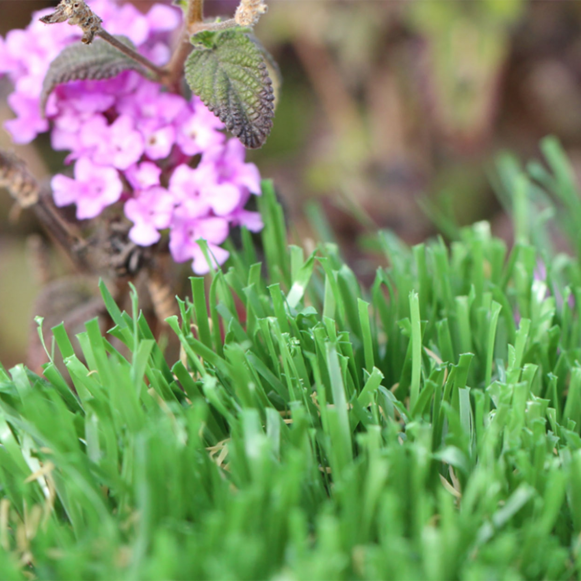 Emerald Series Artificial Grass Synthetic Turf
