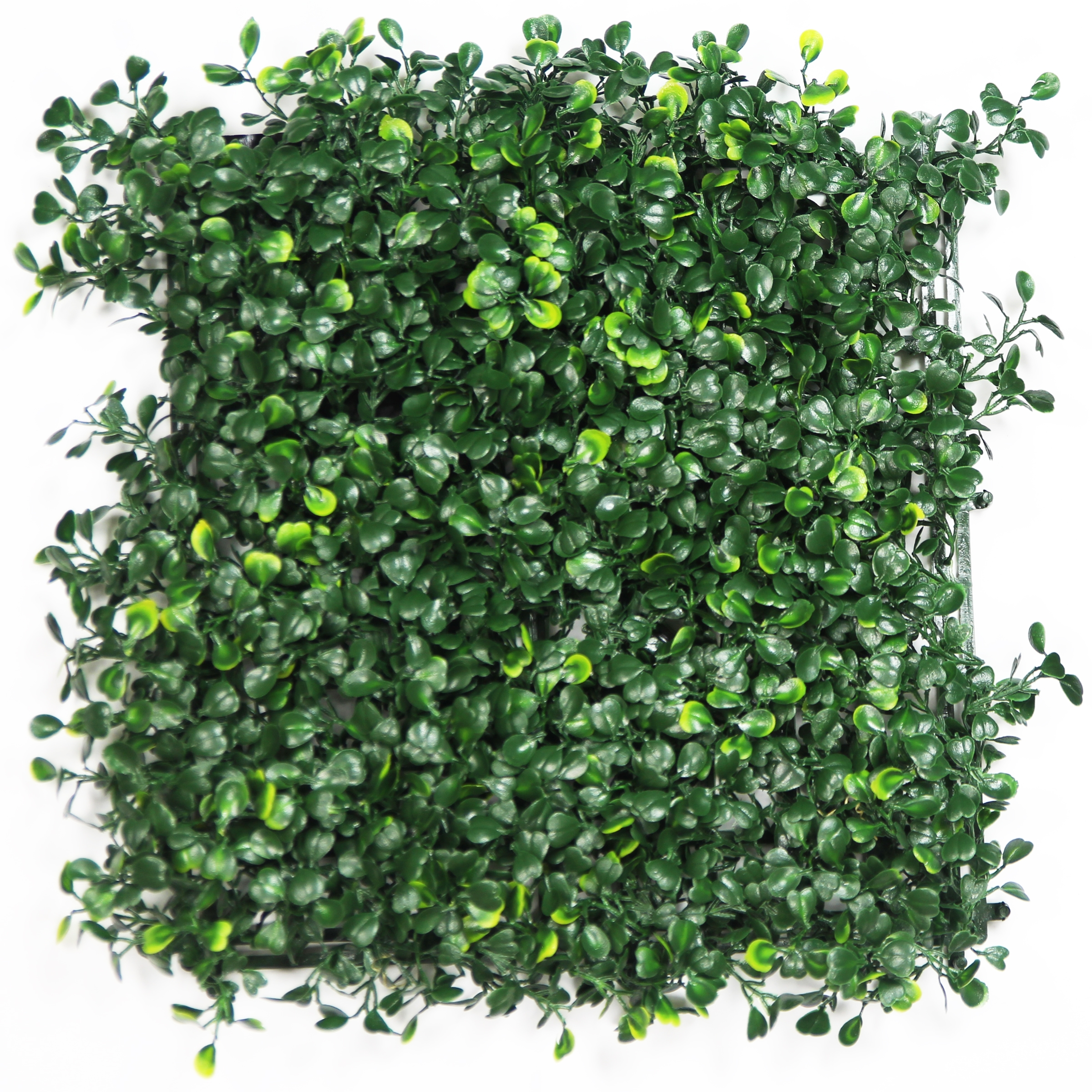 Hawthorn Dark Hedge Artificial Ivy Panel 20 x 20 small leaf