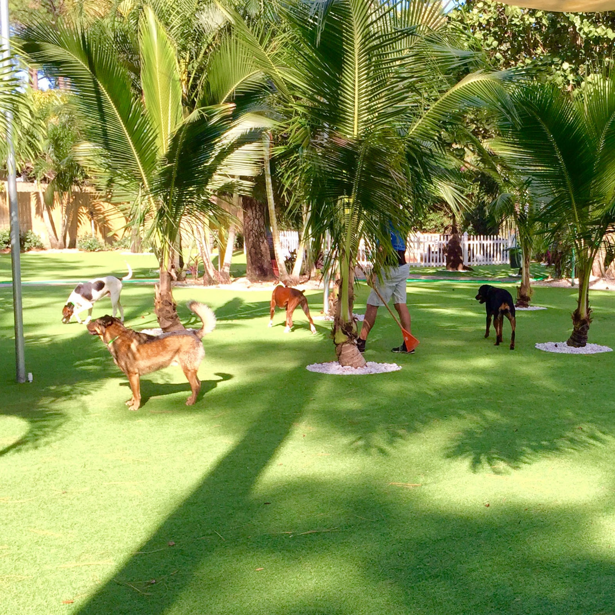 Dog Park, Artificial Grass for Dogs Laguna, California
