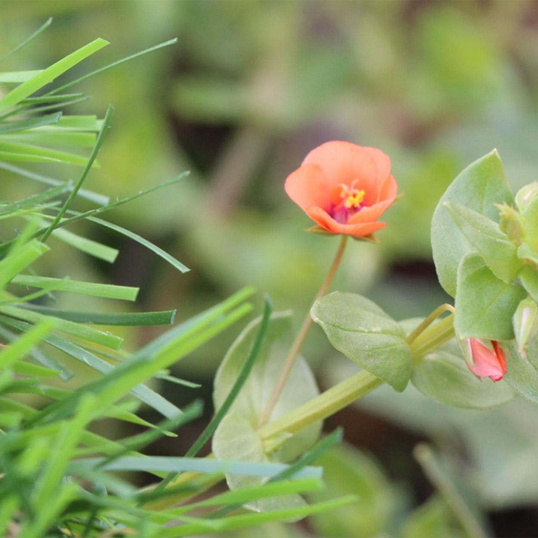 Spring Series Artificial Grass