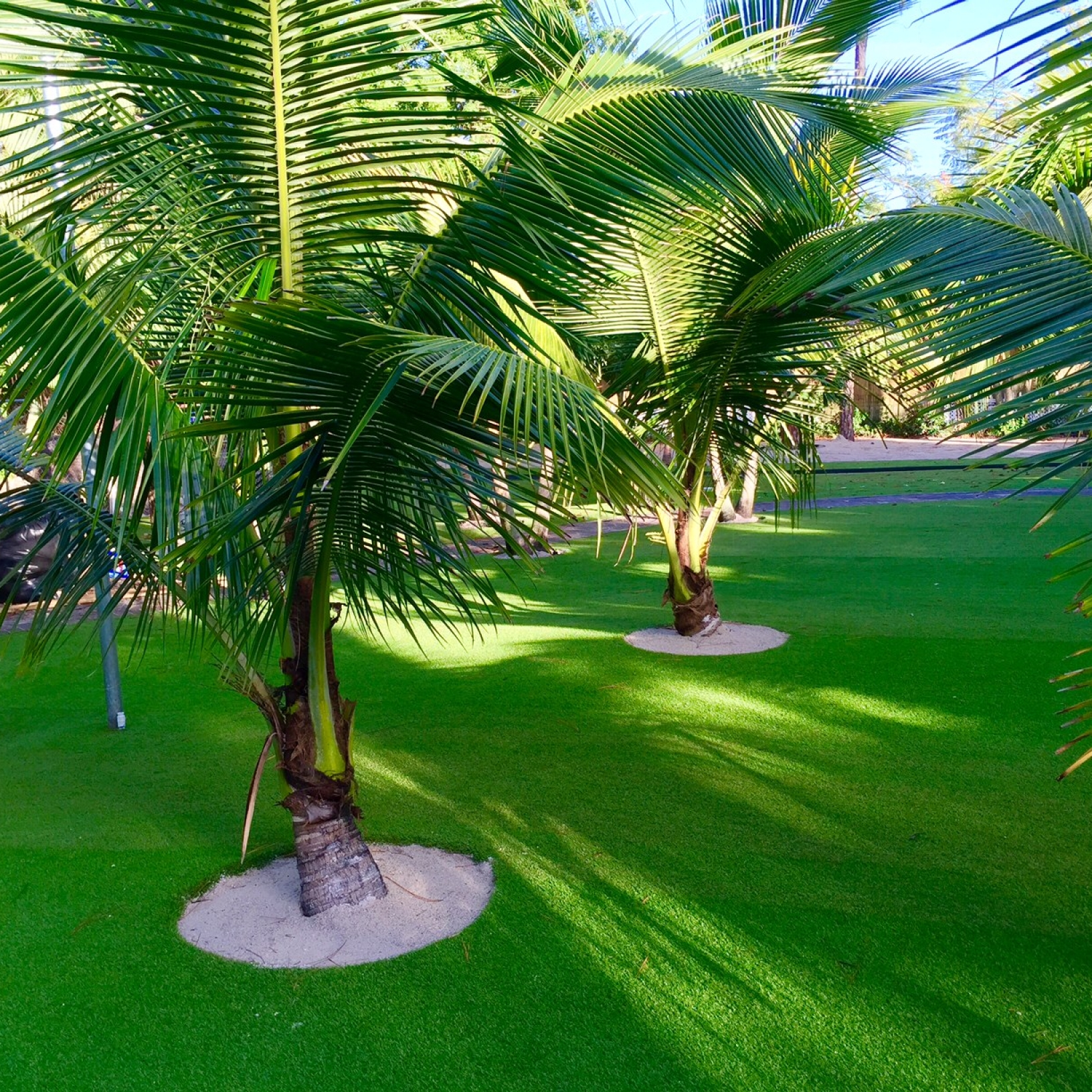 Synthetic lawn installation with palm trees backyard Florida.