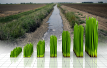 Californias Water Reduction Mandate Feed Artificial Grass Industry