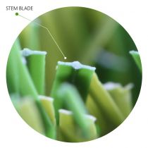 Stem Blade Artificial Grass Synthetic Turf Unique Blade Designs
