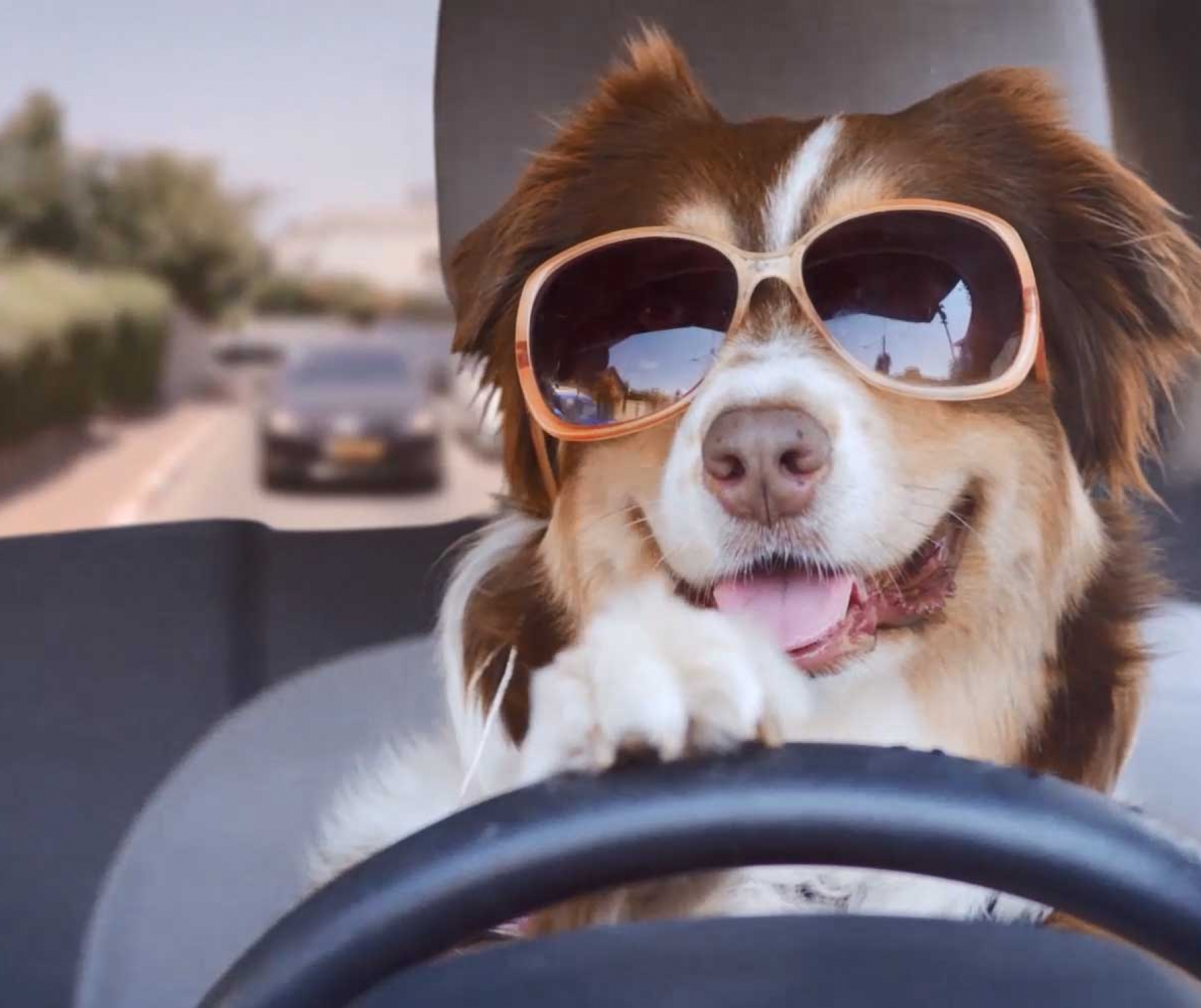 Dog in glasses drives a car