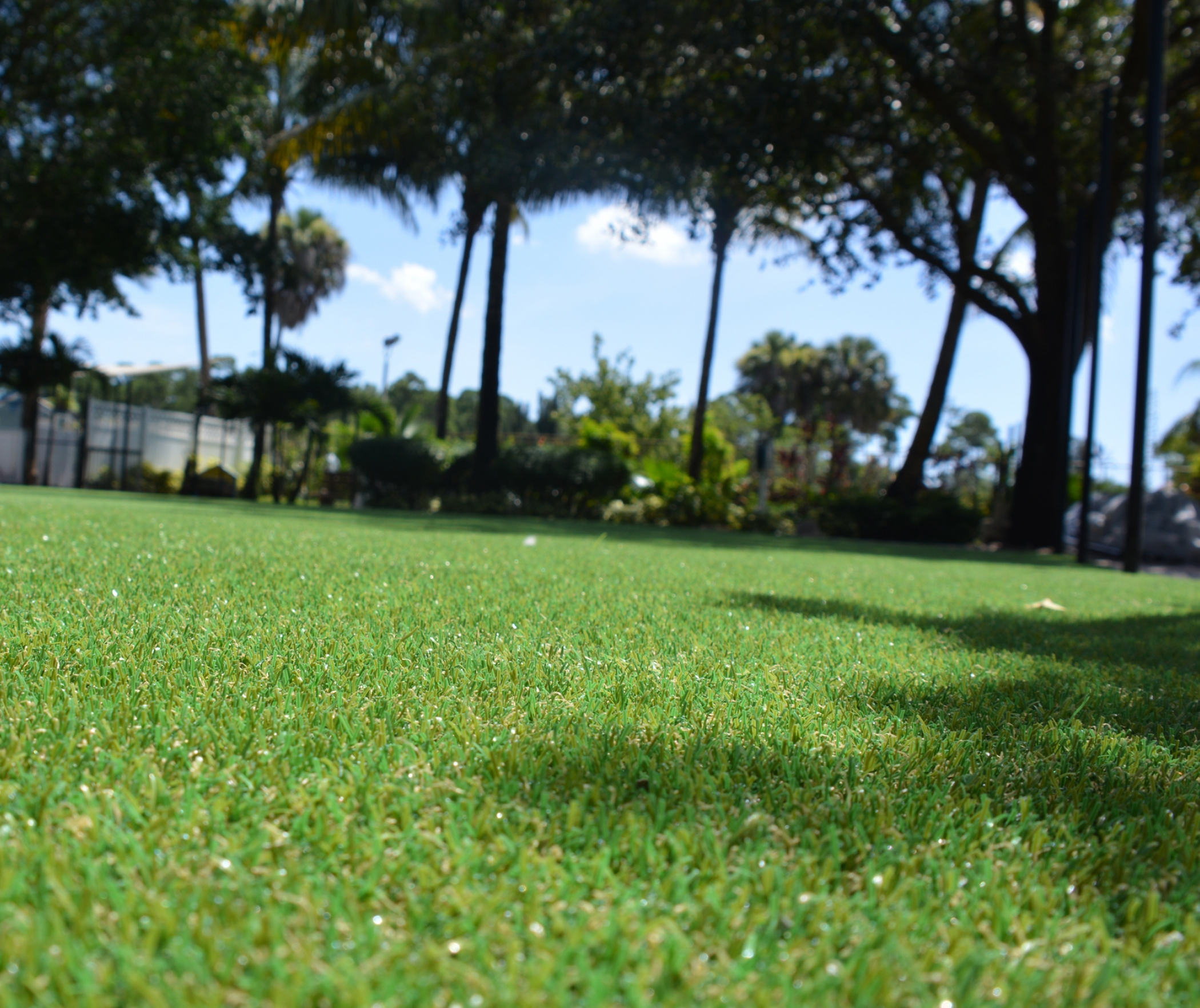Synthetic Grass, Artificial Grass Chico California, Fake Grass
