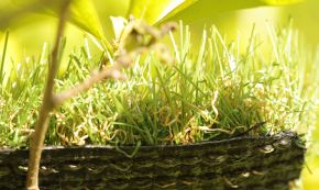 Synthetic looks real grass landscape turf backyard playgrounds olive green brown backing drainage Cashmere leaf leaves