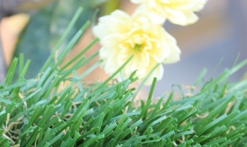 Popular Synthetic Grass