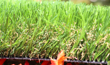 Artificial Turf For Pet Care Centers