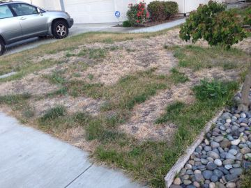 California drought. Brown bald lawn in Bay Area.