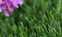 Artificial Grass artificial-grass-mt-sierra-super-94-2.png