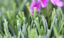 Artificial Grass artificial-grass-mt-sierra-super-94-4.png