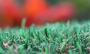 Artificial Grass artificial-grass-petgrass-55-emerald-1.png