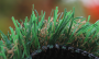 Artificial Grass artificial-grass-petgrass-55-emerald-2.png