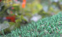 Artificial Grass artificial-grass-petgrass-55-emerald-3.png