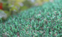 Artificial Grass artificial-grass-petgrass-55-emerald-4.png