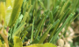 Artificial Grass artificial-grass-s-blade-66-4.png