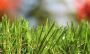 Artificial Grass artificial-grass-spring-46-2.png