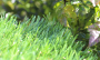Artificial Grass artificial-grass-spring-46-3.png
